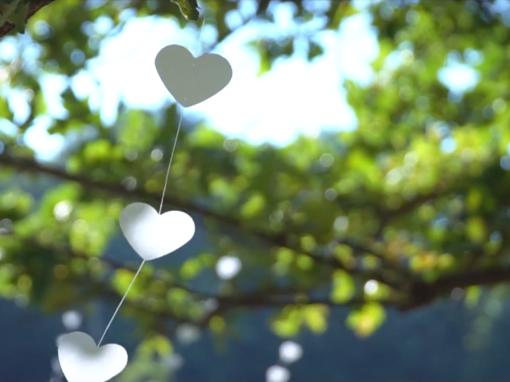 Protejat: editare video nunta